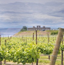 Washington State Wine Country: The Beginner's Guide