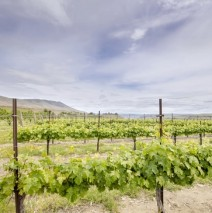 Washington State Wine Tours: List of Regions